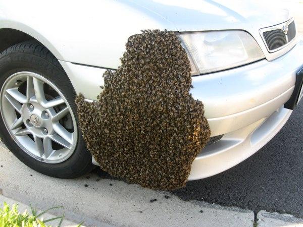 car swarm