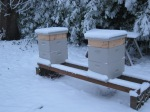 The hives all tucked in.  The bees were flying just one week ago and this gives me hope that they will survive the winter.